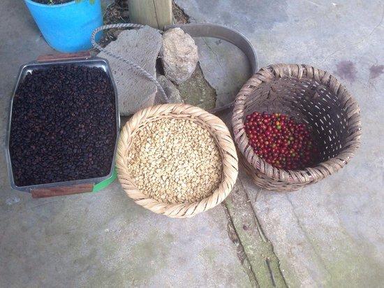 The coffee farm tour next to Corredores del Pacuare