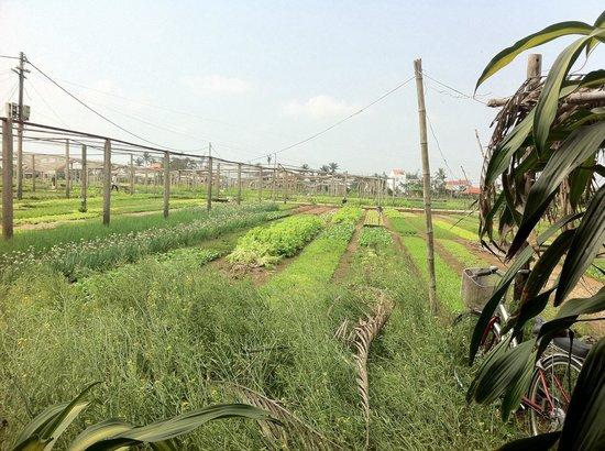 Tra Que Water Wheel : Beautiful farm!