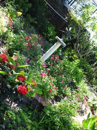 Key West Garden Club: Garden