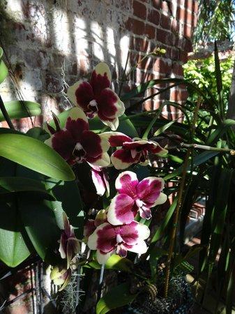 Key West Garden Club: Orchid