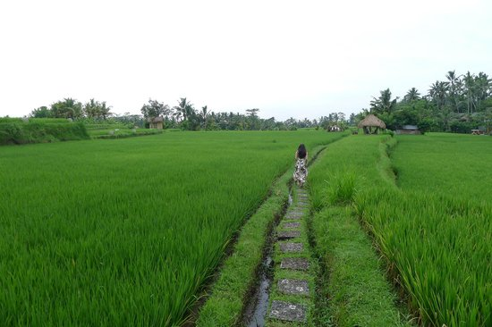 Mathis Retreat: Take a stroll into the rice fields
