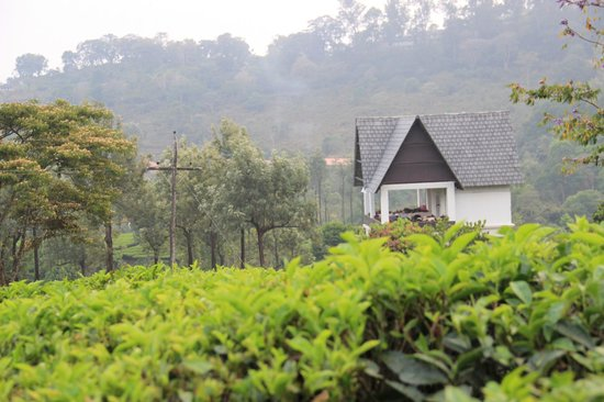 Gruenberg Tea Plantation Haus: View from the tea garden with roof top restaurant in picture.