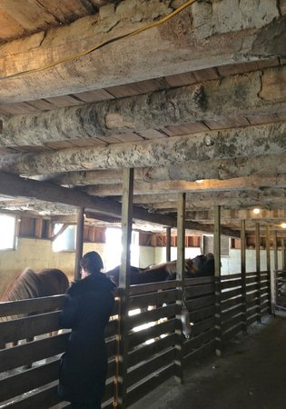 Pretty River Valley Country Inn : Main barn with Horses