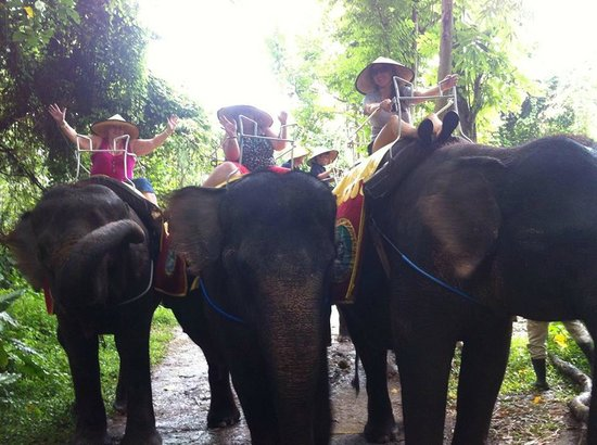 Bali Safari & Marine Park : Elephant Safari