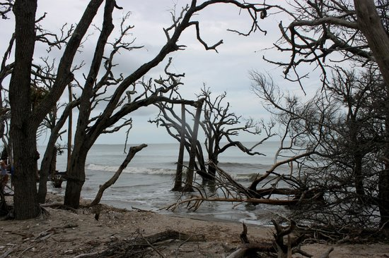 Botany Bay Plantation Heritage Preserve and Wildlife Management Area : on the beach