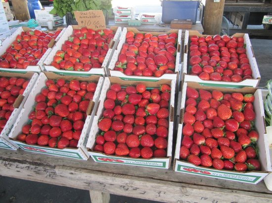 Webster, FL: Fresh Strawberries