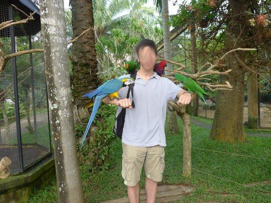Bali Bird Park: Don't peck me please