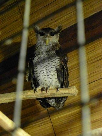 Bali Bird Park: Whoooo