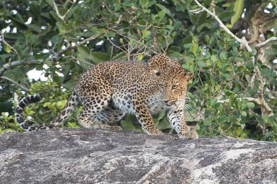 Kulu Safaris Sri Lanka: At the safari