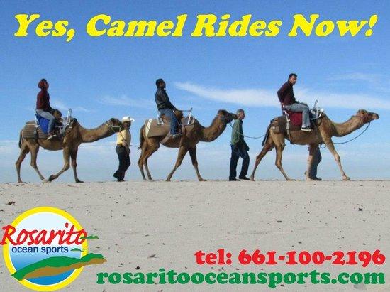 Rosarito Beach: Camel rides