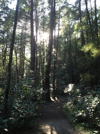 Adventures on the Gorge: Trees on Hiking trail