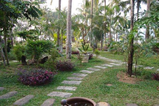 Coco Palm Beach Resort & Spa: вид из нашего номера