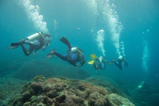 Blue Corner Dive: Dive group