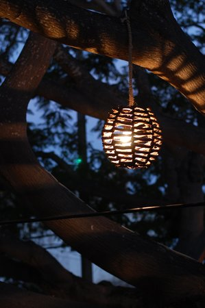 Loco Loco: Beautiful Lanterns hang on the tree surrounding the seating area