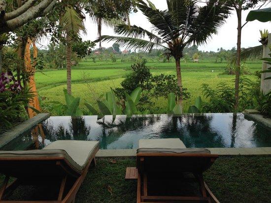 Ubud Padi Villas: View from Villa