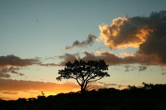Makweti Safari Lodge: African sunsets are spectacular