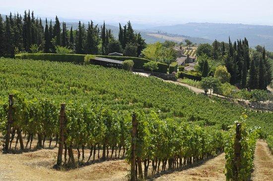 Casalvento Winery : Vineyards