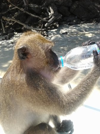 Offspray Leisure Co. Day Trips: encounter with a monkey in small monkey island
