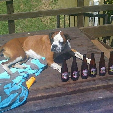 Nieu-Wherry Meadow: Petfriendly....no Ozie is not an alcoholic but he does support local brands