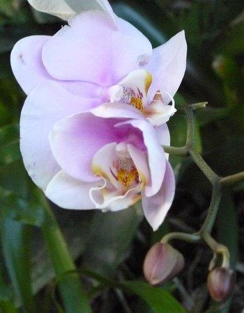 Magnifique Fleur De Couleur Vive Photo De Jardin Botanique De Deshaies Deshaies Tripadvisor