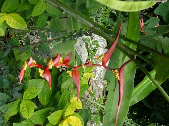 Encore Des Fleurs Picture Of Jardin Botanique De Deshaies Deshaies Tripadvisor