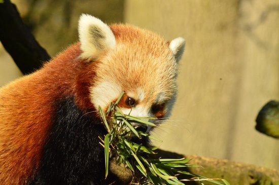ZSL Whipsnade Zoo: Yum