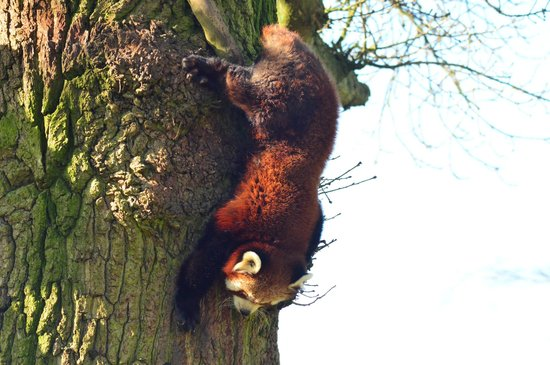 ZSL Whipsnade Zoo: Ooh,I'll definitely come down for food