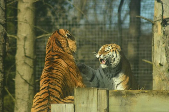 ZSL Whipsnade Zoo: You FORGOT my Valentine!