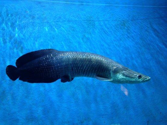 Maritime Museum: Aquarium