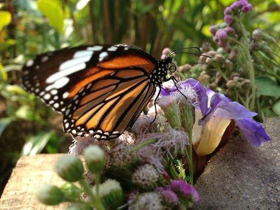 Луангпхабанг, Лаос: Colourful butterflies
