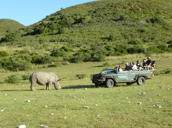 Gondwana Game Reserve: Who's going to move?