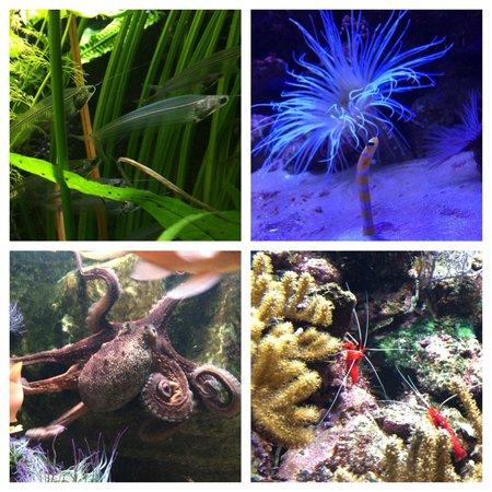 Muséum-Aquarium de Nancy : An amazing little place
