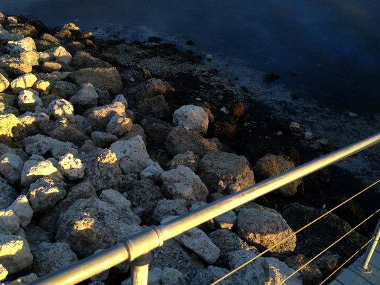 Ibis Bay Beach Resort: Strand remsan till havet, inte speciellt inbjudande.....