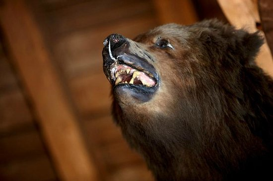 Grizzly Bar: Grizzly