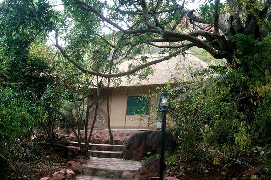 Mashovhela Bush Lodge : Safari Tent