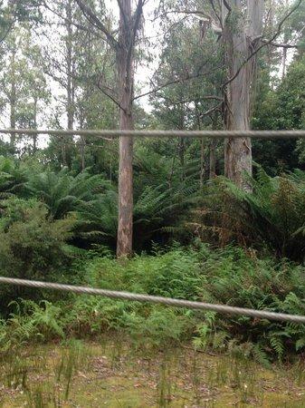Huon Bush Retreats: View off the deck
