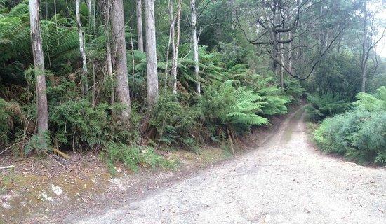 Huon Bush Retreats: The drive to the stream side cabin
