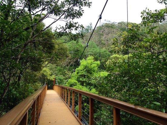 Hiji Waterfall: 吊り橋を渡り終えて(往路)