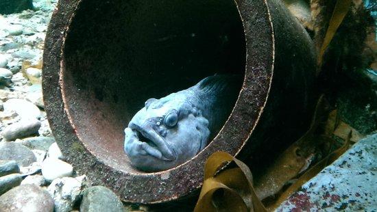 Macduff Marine Aquarium: Good Looking Fish