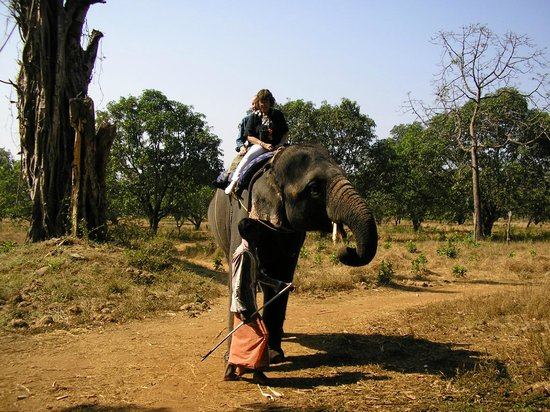Pride Sun Village Resort and Spa: elephant ride at spice plantation