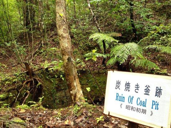 Hiji Waterfall: 途中こんなのもありました。