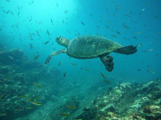Carrillo Adventures & Travel : Carrillo Adventures Tour Kayaking & snorkeling Isla Chora Samara Guanacaste Costa Rica