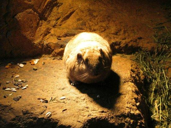 Helsinki Zoo (Korkeasaari Elaintarha): какая-то мышка