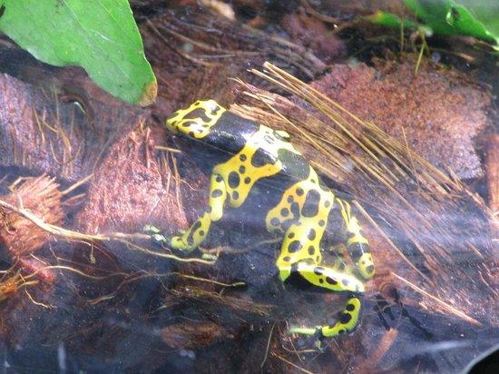 Helsinki Zoo (Korkeasaari Elaintarha): ядовитая лягушка