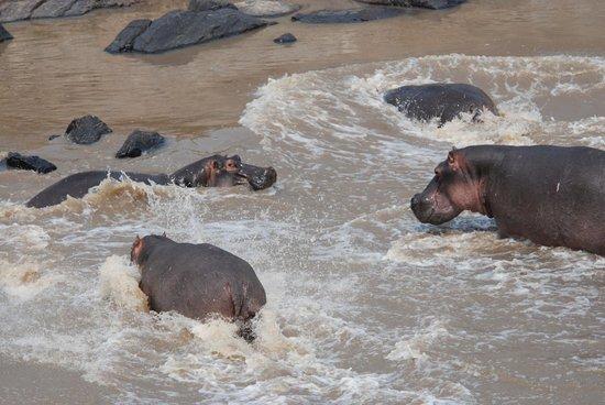 Mara Bushtops : On the Mara