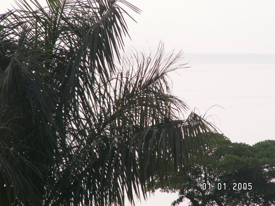 View From Room That Expanse Is The Lake With A Palm Tree Framing It