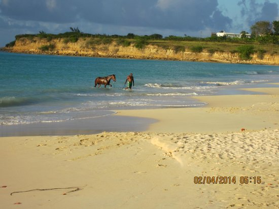 Fort James: Even horses like to swim in Antigua :-)