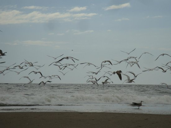 Playa Poneloya: lots of birds