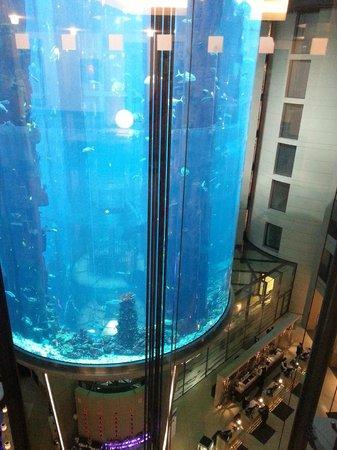 Radisson Blu Hotel, Berlin: Aqua dome