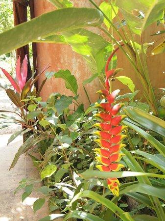 Caribe Town: Garden view